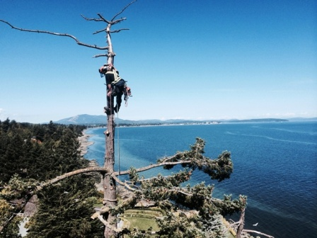 https://rctree.ca/wp-content/uploads/2019/12/Arborist-Victoria-x1.jpg